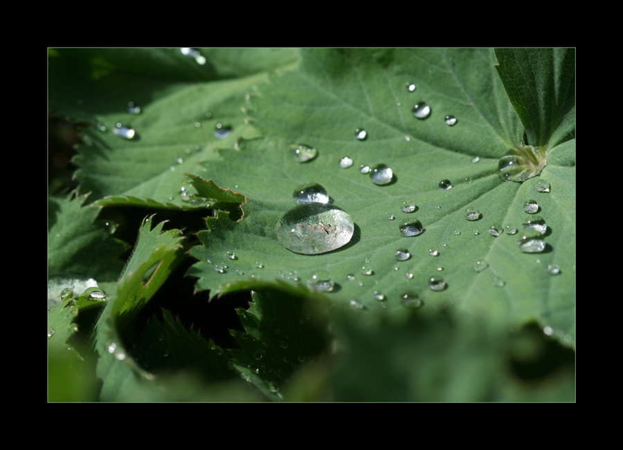tears of nature