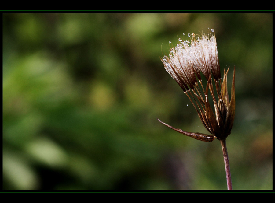 tears of nature II