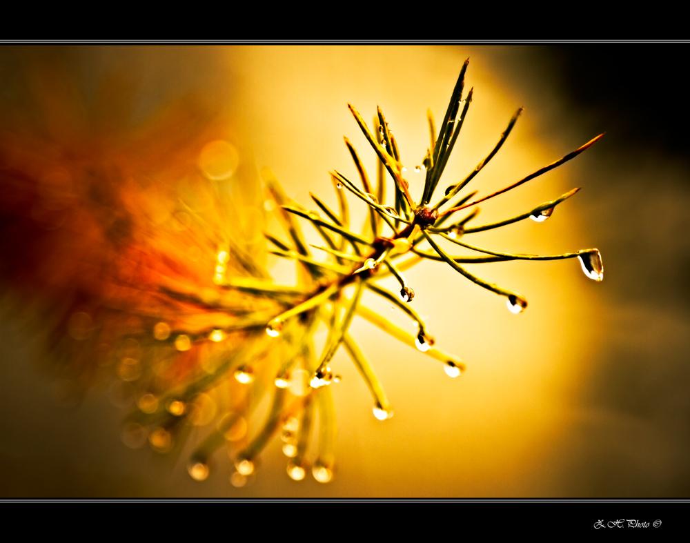 Tears of the Sky