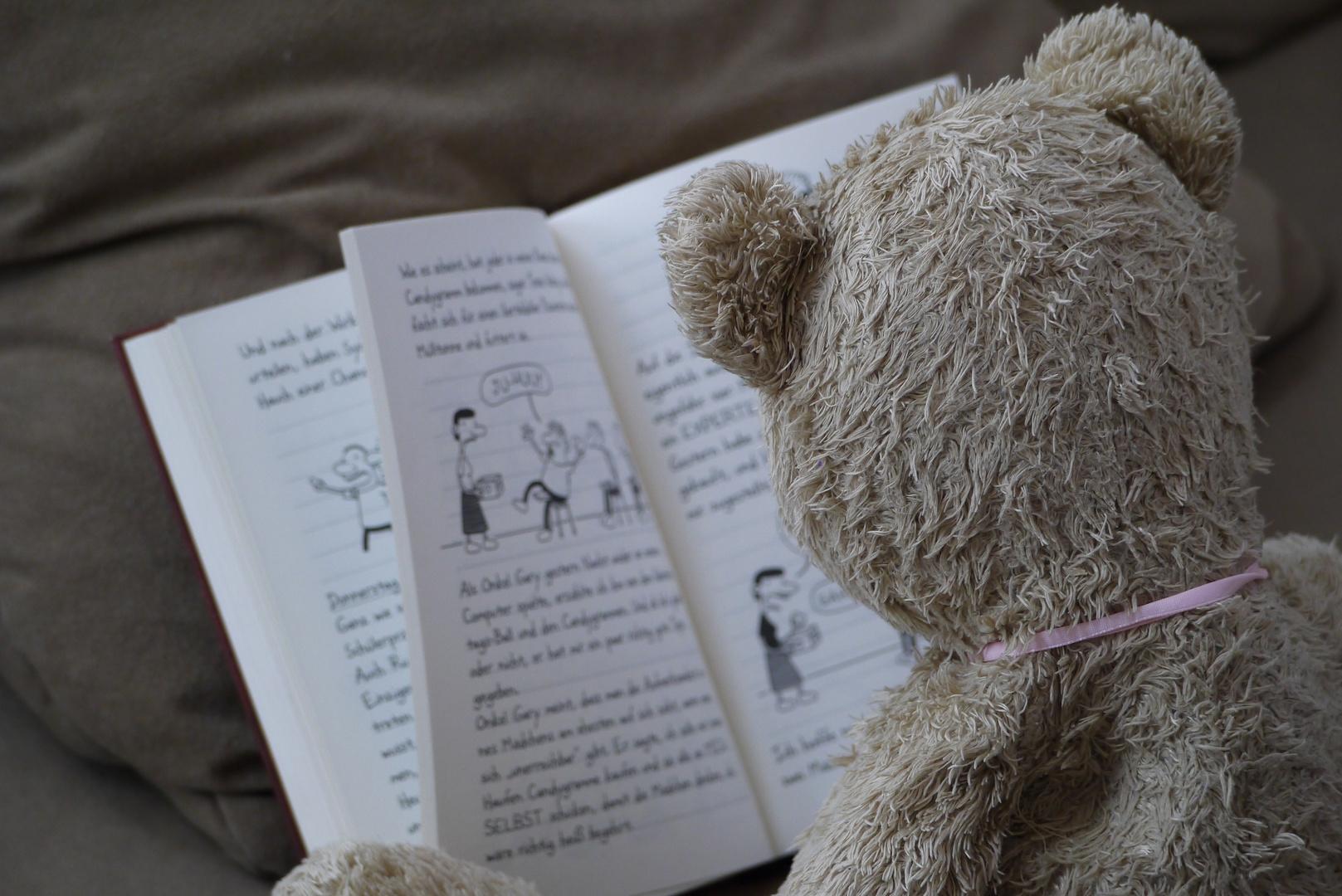 Teddy am lesen