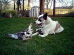 Teddy & Charly im Garten beim Krafttraining
