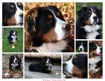Teddy Collage 2006.