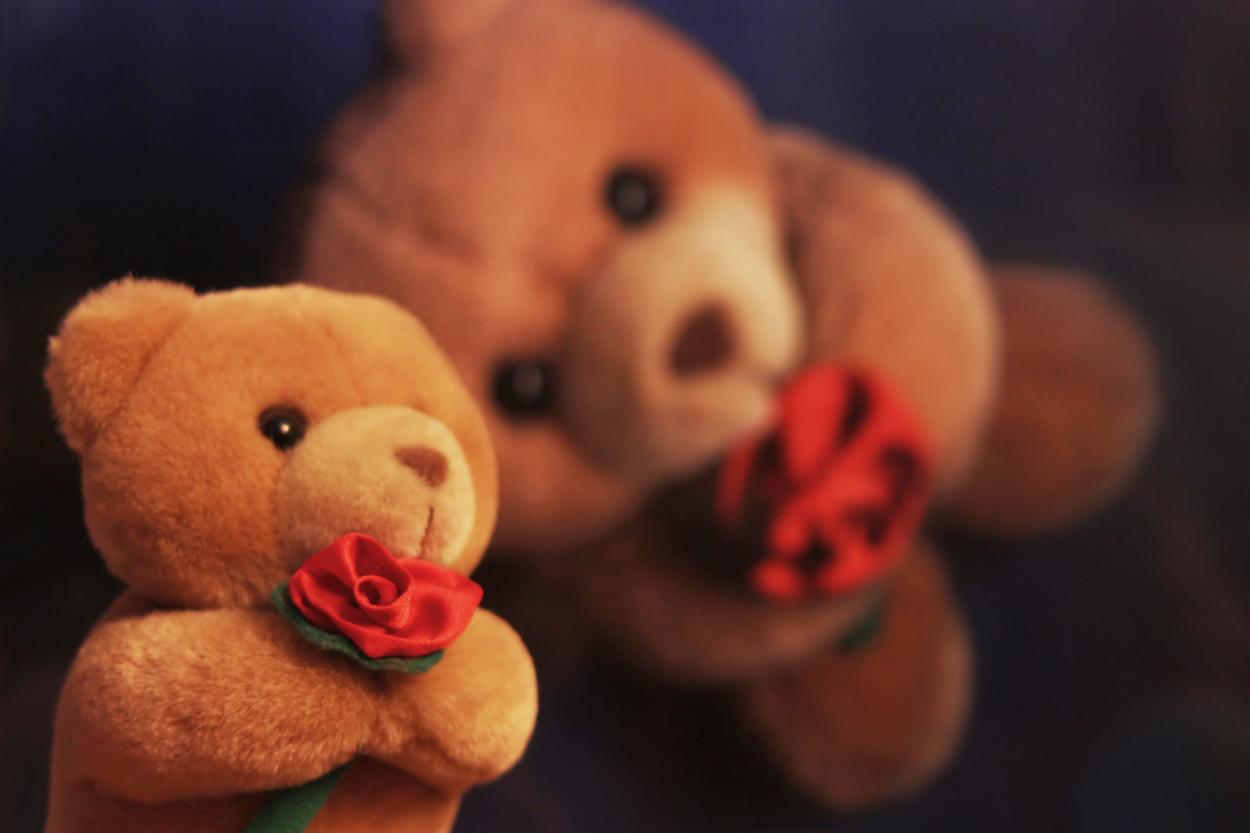 Teddy hoch 2