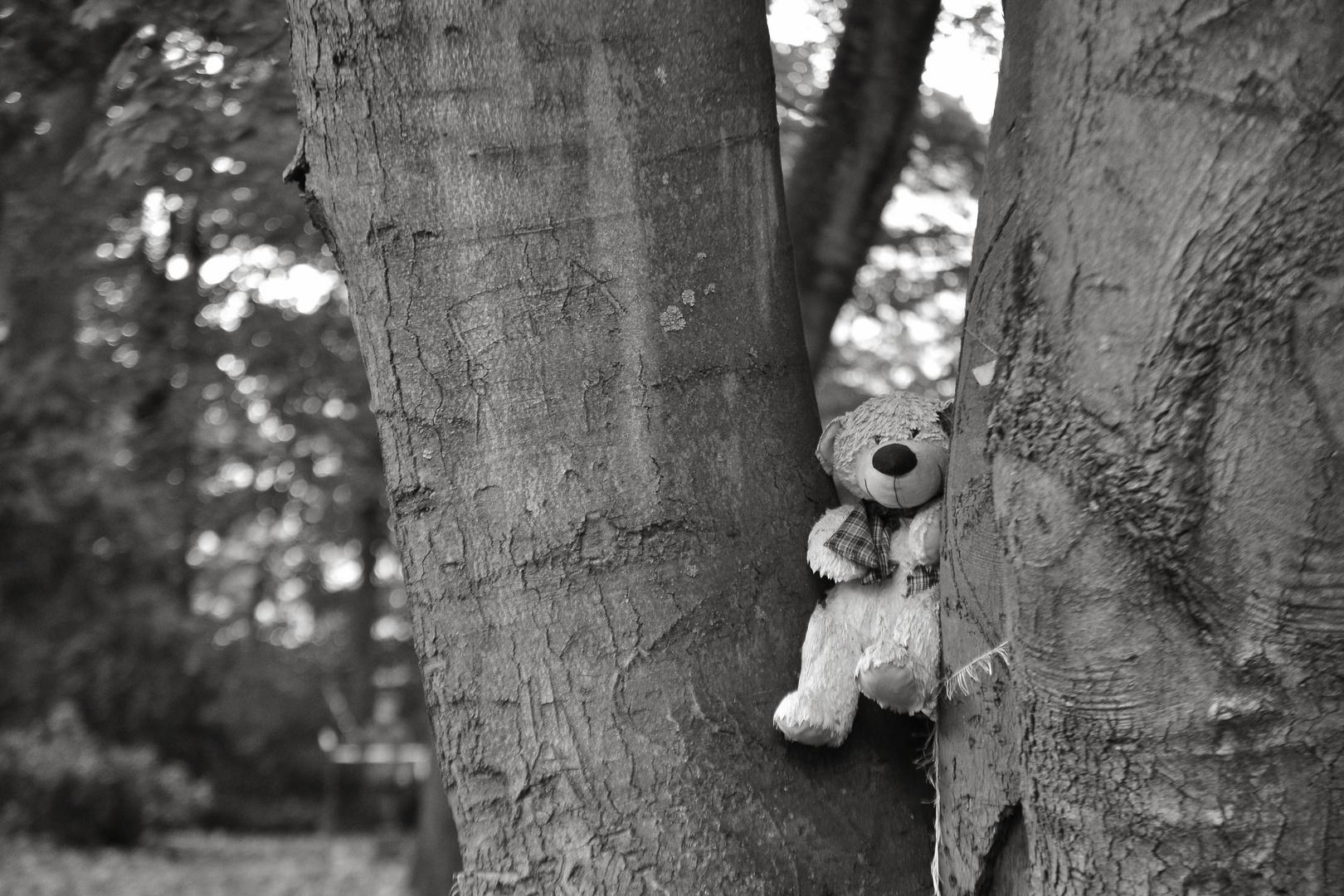 Teddy im Baum