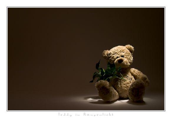Teddy im Rampenlicht
