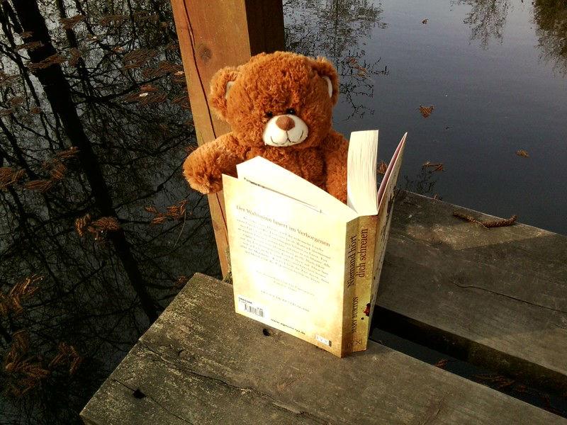 Teddy im Wald (1)