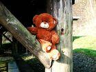 Teddy im Wald (2)