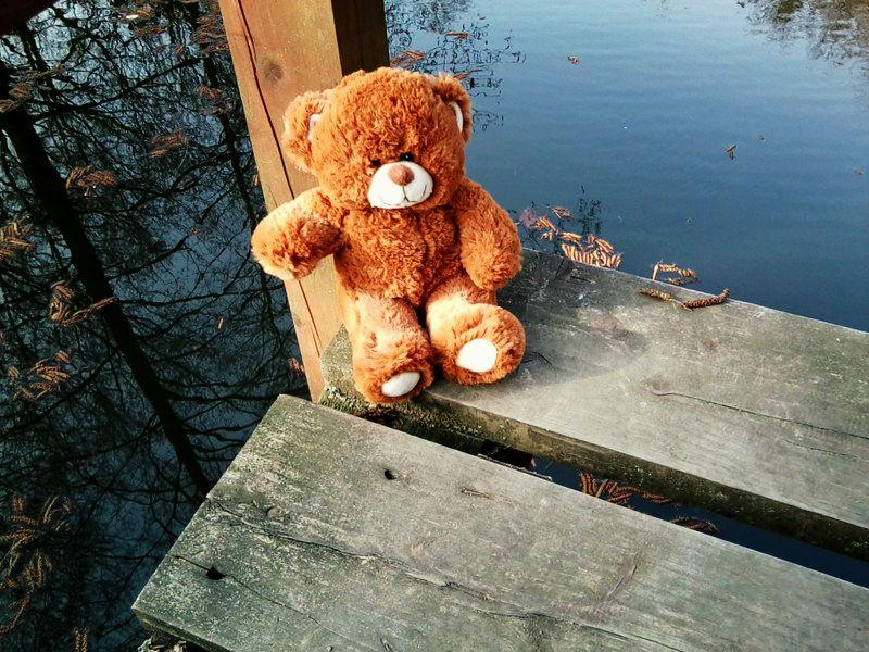 Teddy im Wald (3)