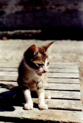 Teddy mein Kätzchen!