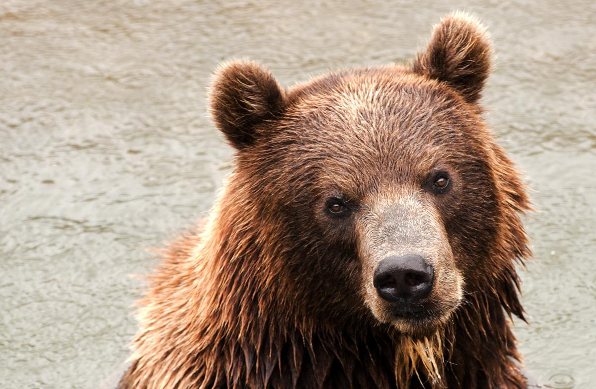 (Teddy)Bär