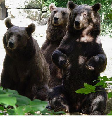 Teddybären Trio