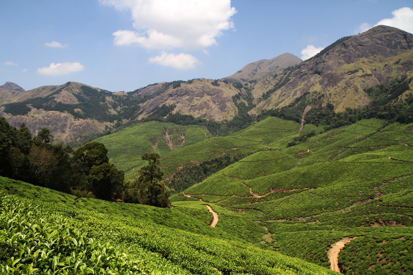 Teegarden in Kerala