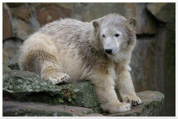 Teenager-Knut