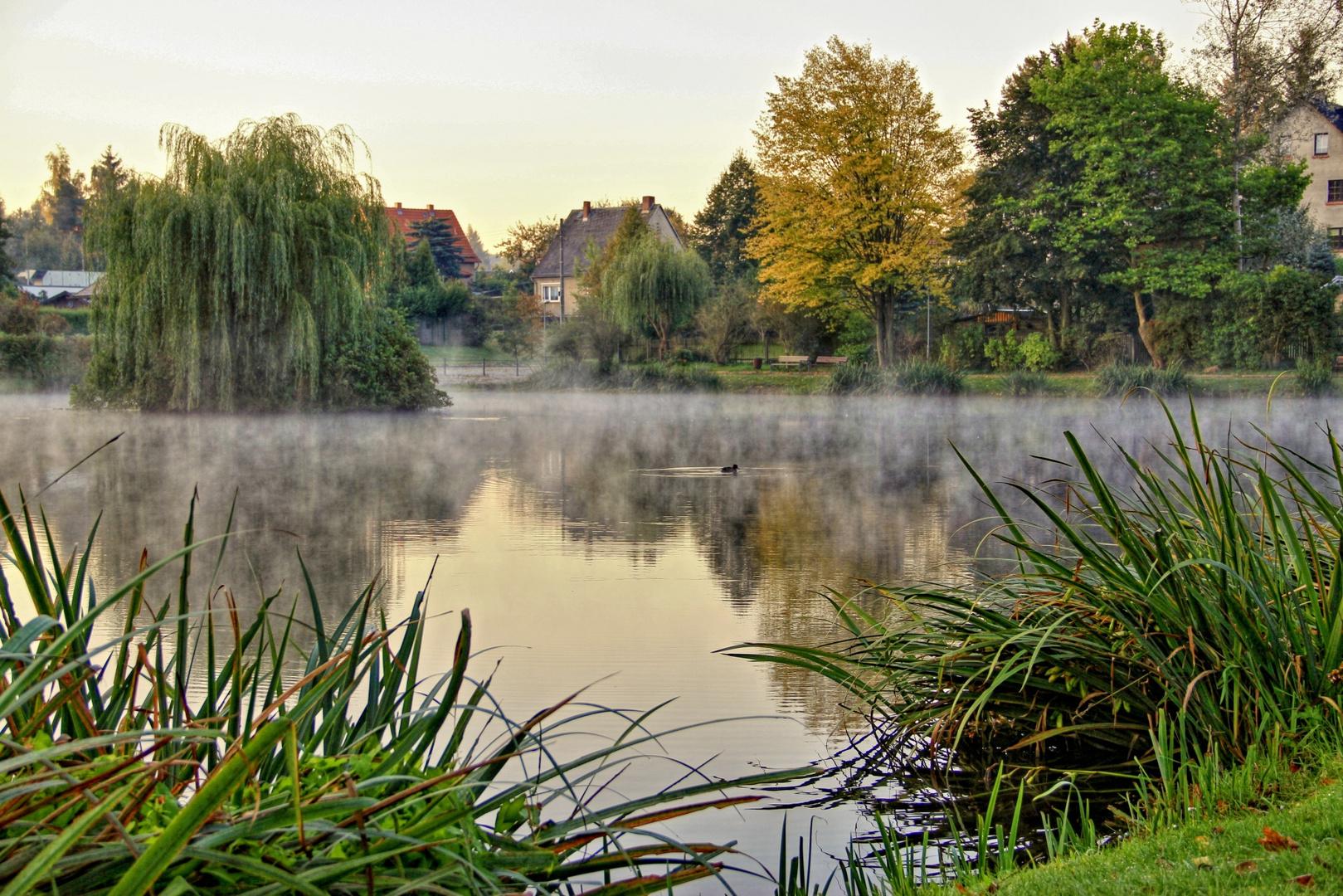Teich am Morgen