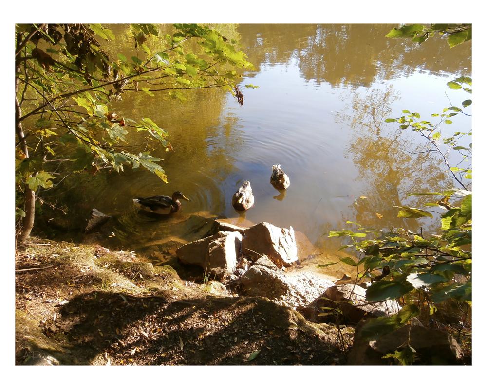 Teich im Herbst