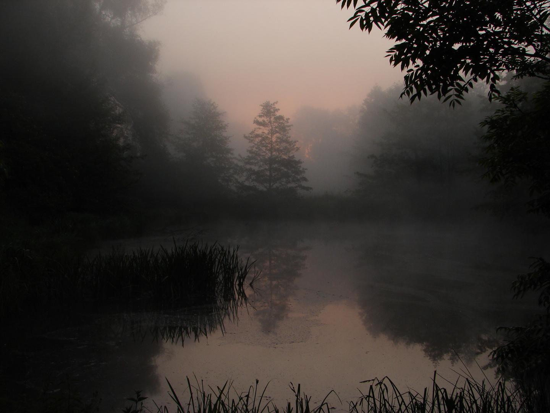 Teich im Morgennebel