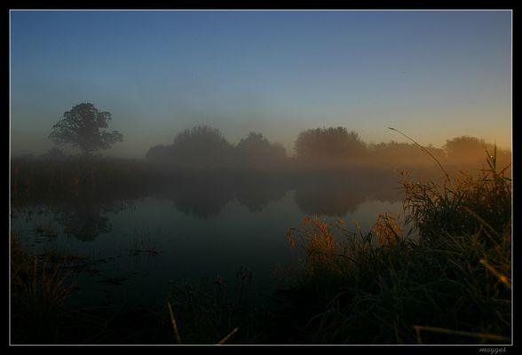 Teich im Nebel