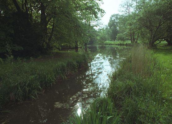 Teich im Schloßpark