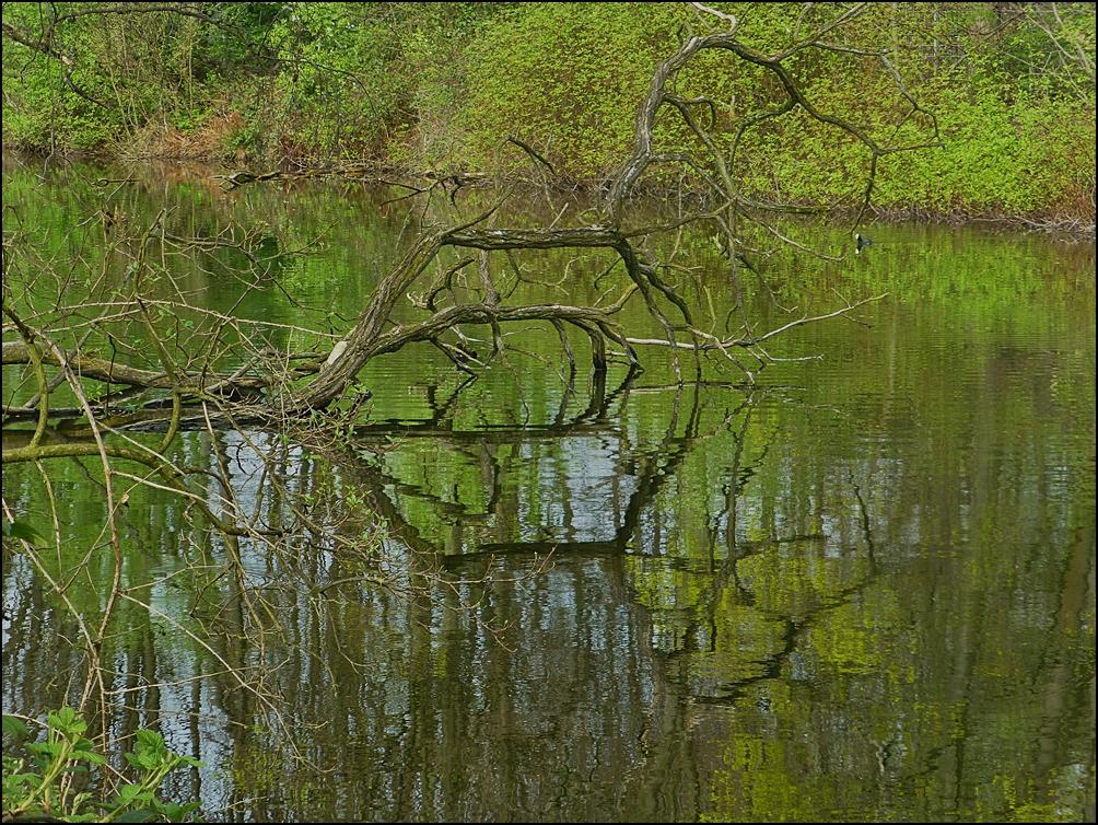 Teich in den Ruhrauen