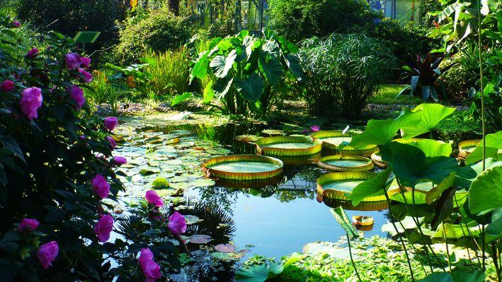 Teich vor dem Gewächshaus in der Kölner Flora