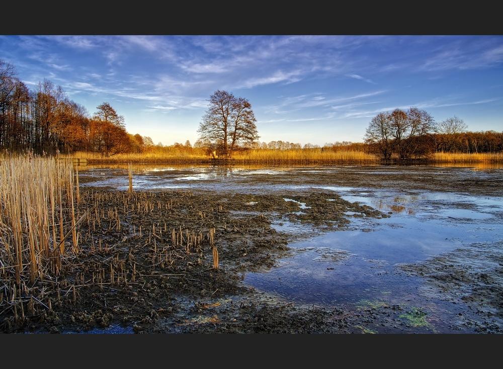 - Teichlandschaft -
