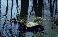 Teichlandschaft 2