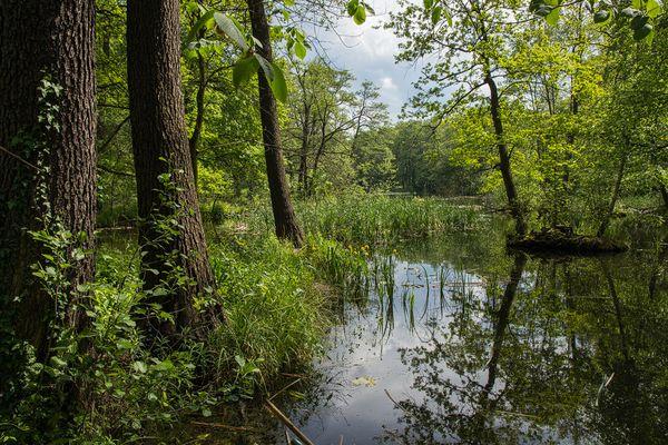 Teichlandschaft bei Slubice