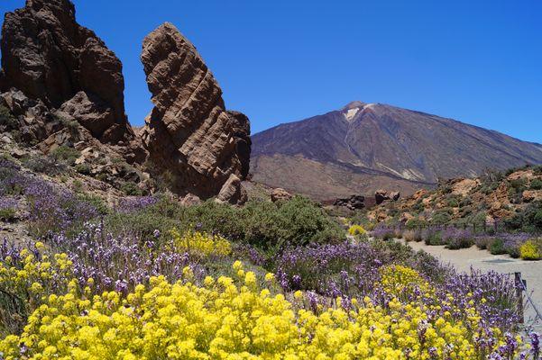 Teide im Blütenmeer