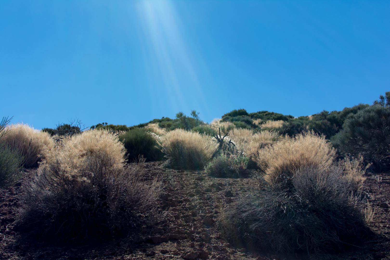 Teide Nationalpark 1