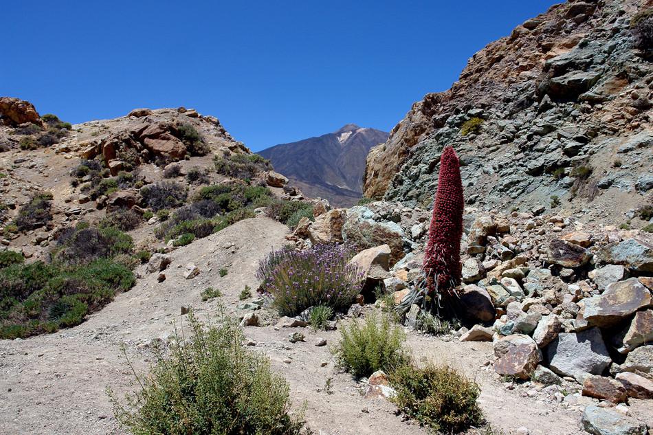 Teide - Tajinaste Roja