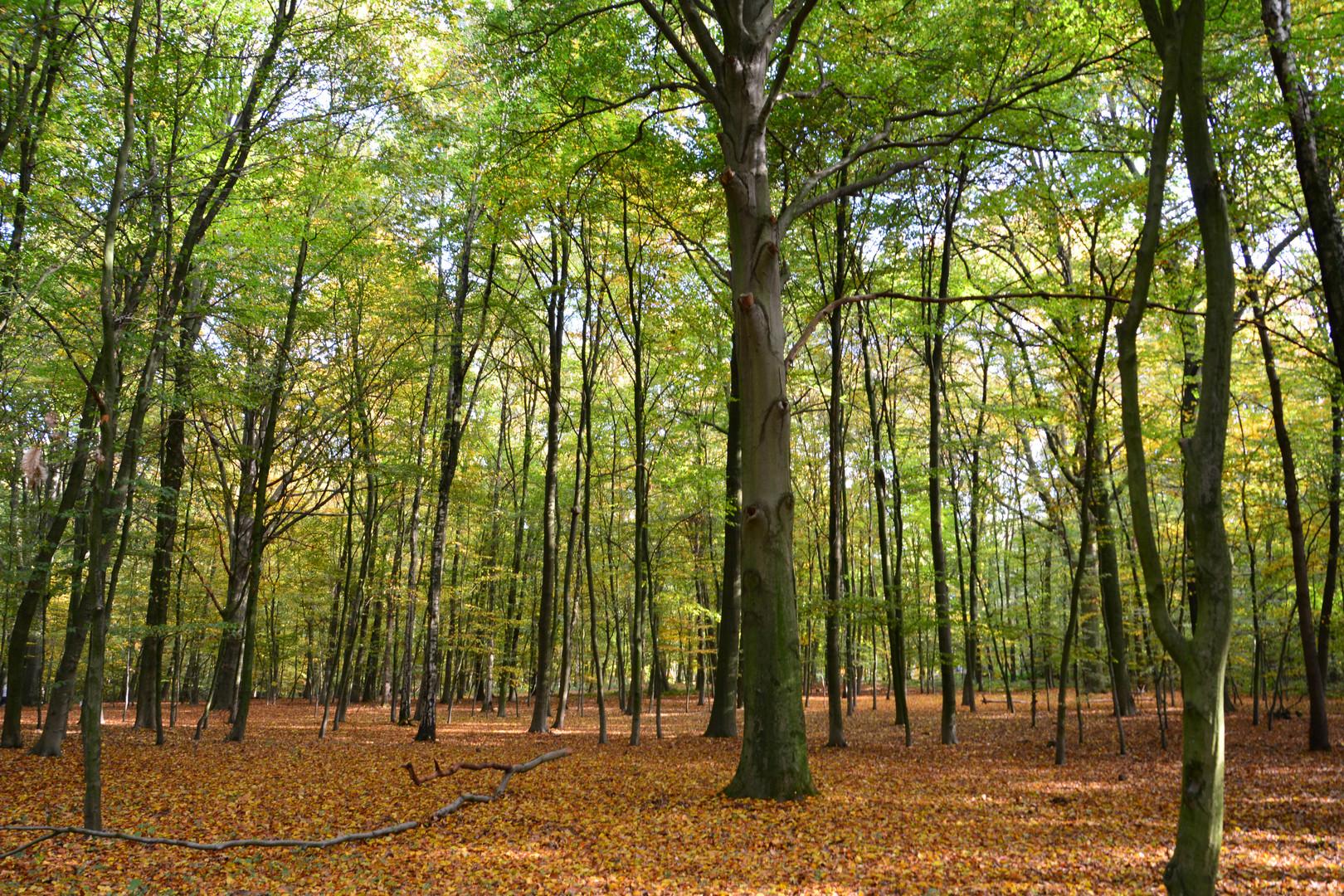 Teilakt im Herbstwald