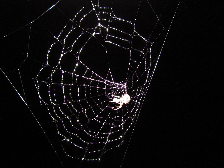 tela de agua (web of watwer)