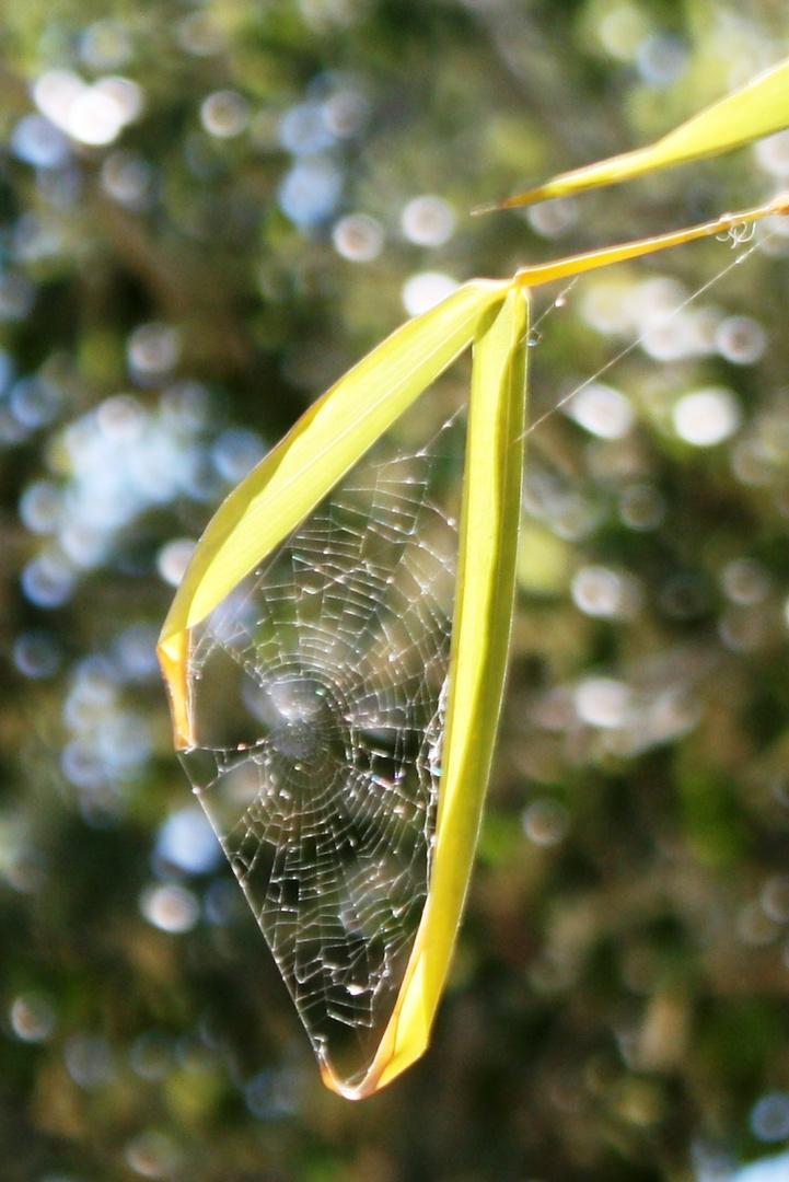 tela de araña y bambú
