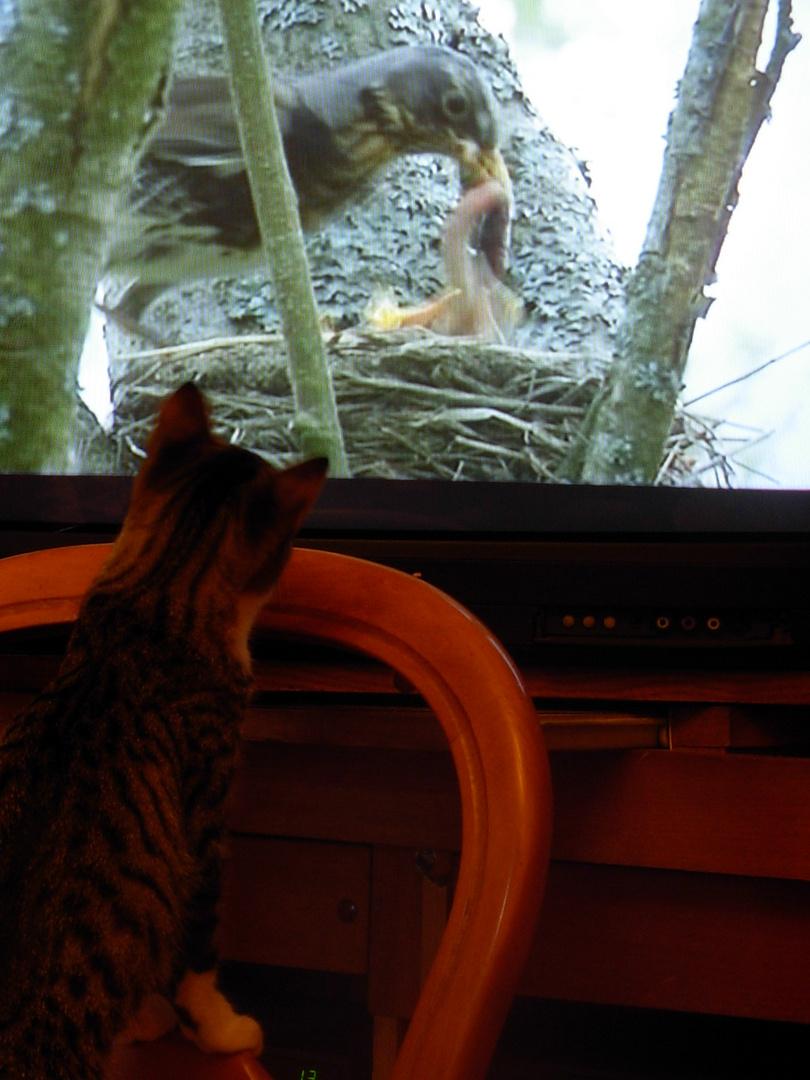 Télé à chat
