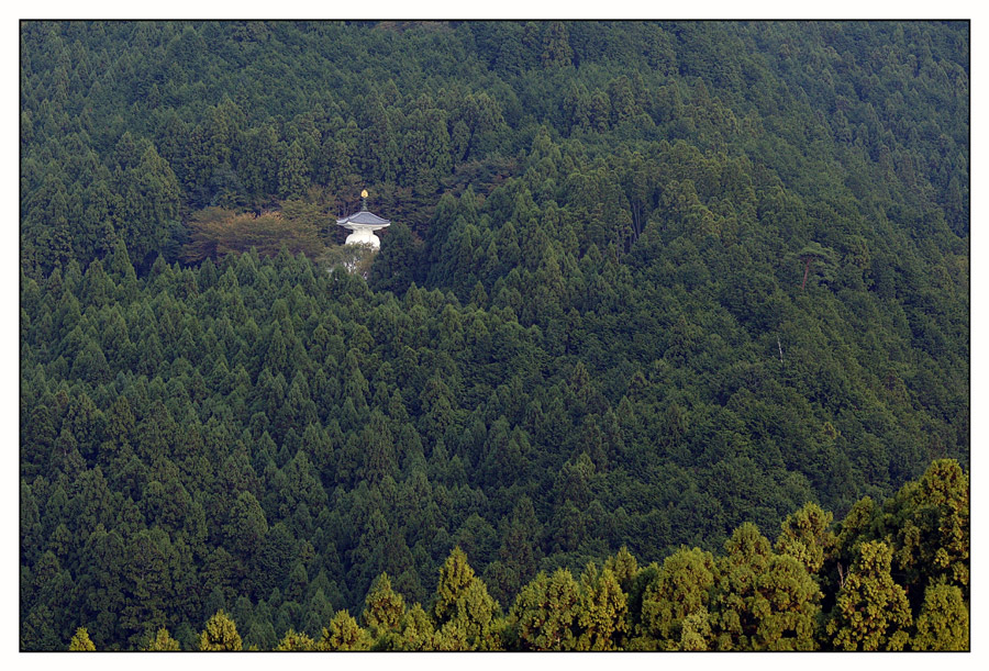 Tempel im Wald