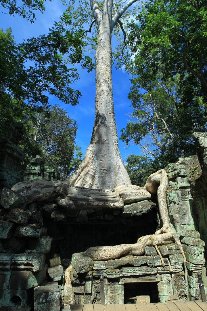 Tempel mit Baum 5