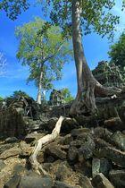 Tempel mit Baum