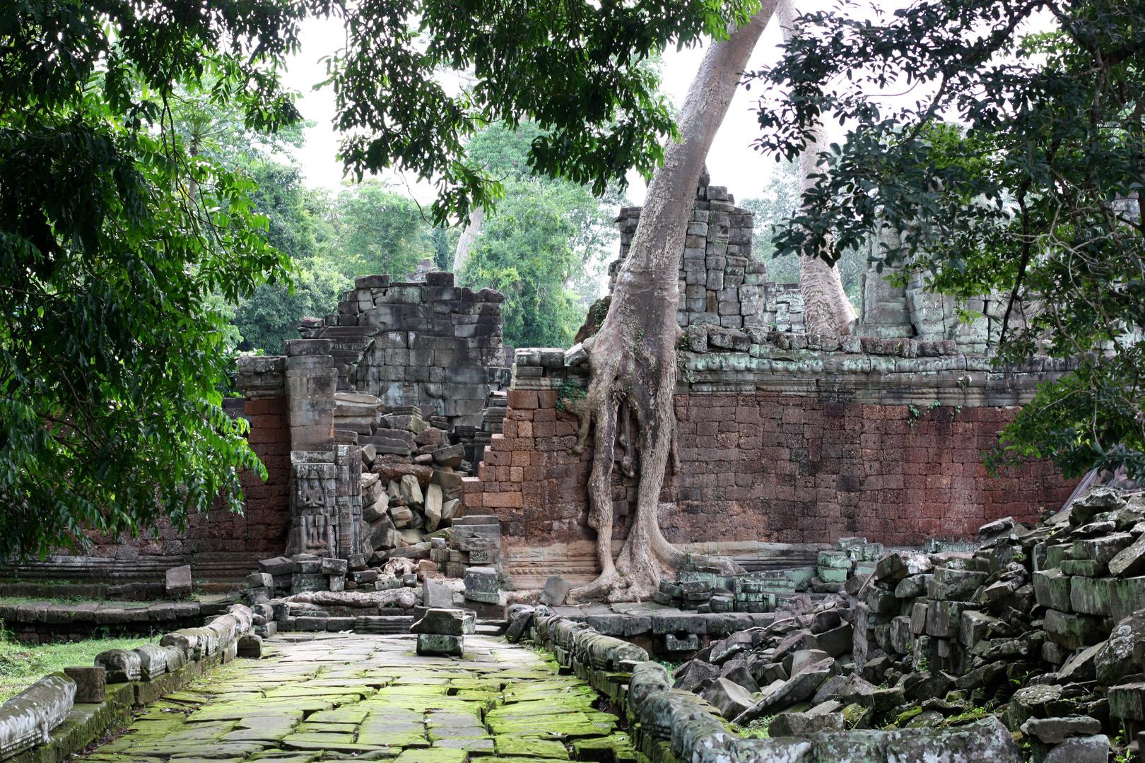 Tempelanlage im Urwald