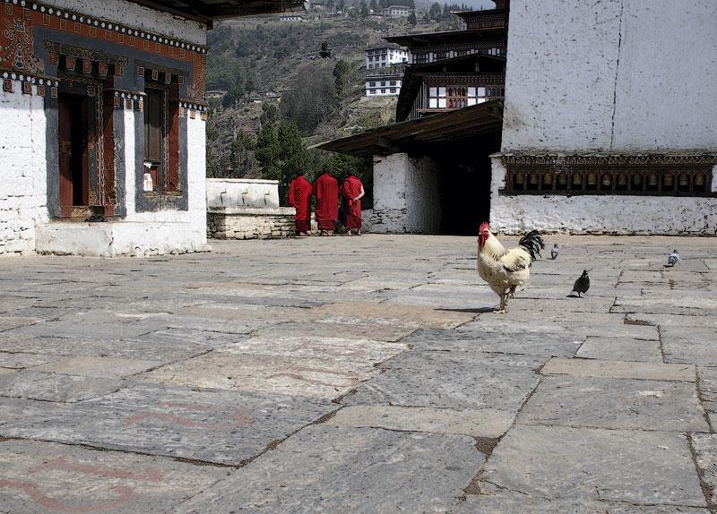 Tempelhahn