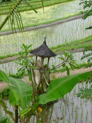 Temple des rizières