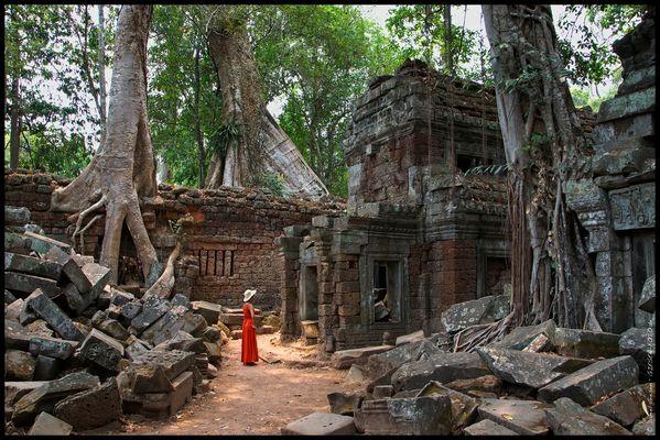 Temple Ta Prom, Angkor/Cambodia