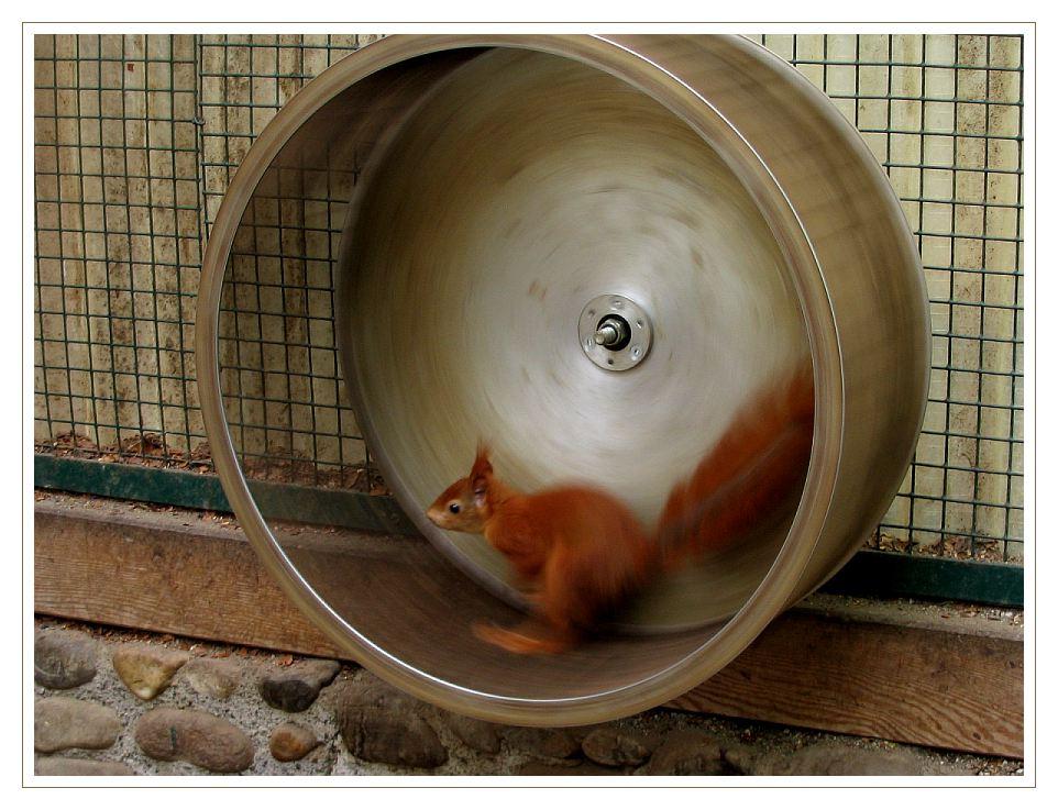 Tempo kleines Eichhörnchen
