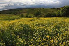 temporale in giallo (2)