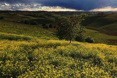temporale in giallo