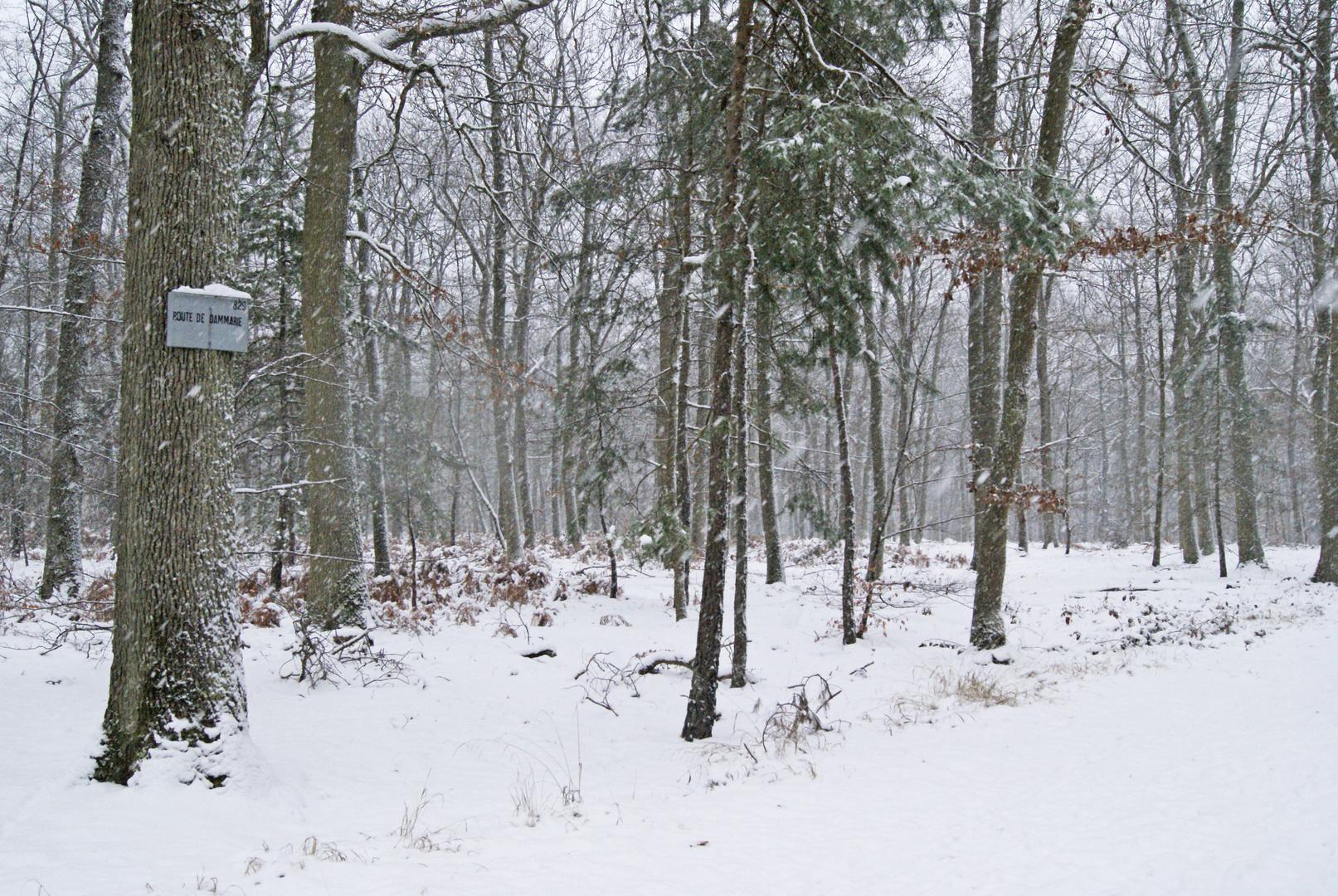 tempête de neige sur la forêt de fontainebleau!!
