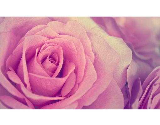 Tender rose