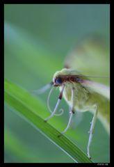 tendre papillon