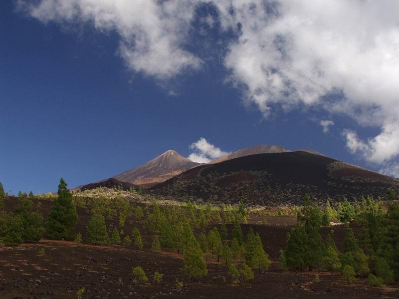 Tenerife Oct 2001  Kanarische Pinien und Teide Volcano
