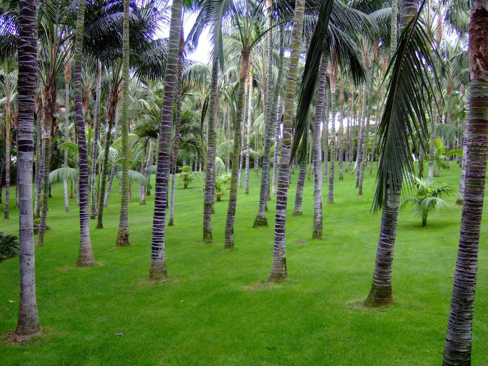 Teneriffa Garden