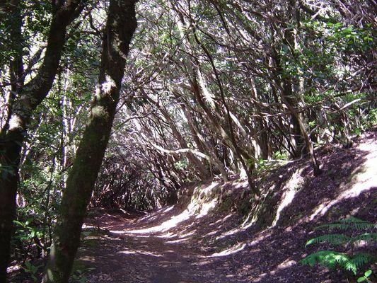 Teneriffa: Mercedes Wald (Teil 2)